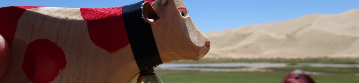 Cow On Tour